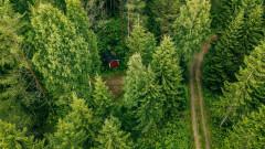 Защо страната с най-много гори в Европа трябва да внася биомаса отвън?