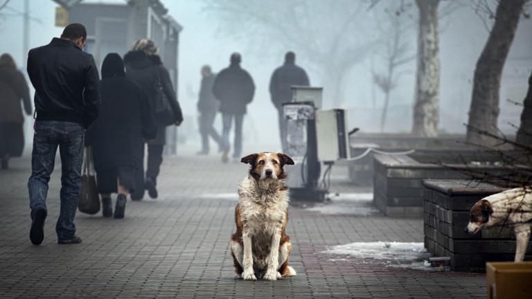 Историите на бездомните животни, разказани със снимки