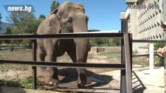 Всеки може да види храненето на животните в софийския зоопарк