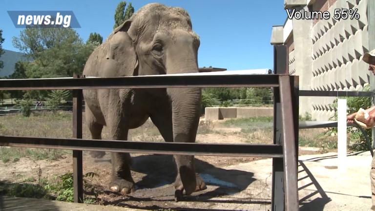 """Днес столичният зоопарк пуска посетителите """"зад завесите"""""""