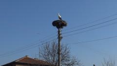 Първият щъркел кацна в Пловдивско преди Баба Марта