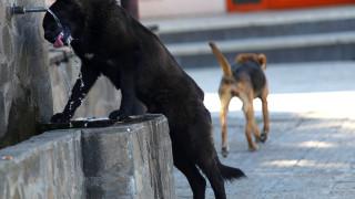 Глутници бездомни кучета тормозят жителите на Исперих
