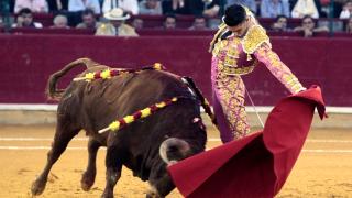 Топ съдът на Испания отмени забрана за провеждане на бикоборство в Каталуния