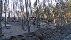 Най-голямата жертва на пожарите е почвата