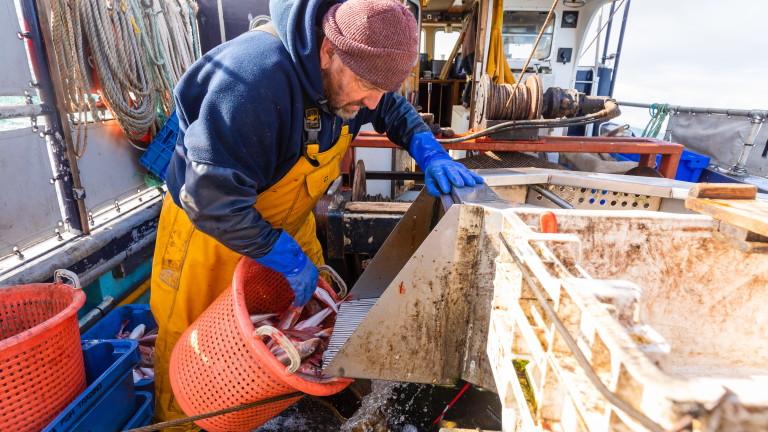Защо рибарството е препъникамък на преговорите за Брекзит?