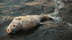 Мъртва риба в Марица край Пазарджик и Пловдив заради изпускането на пластмаса