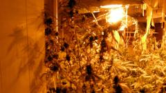 Домашна оранжерия за марихуана разбиха във Варна