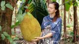 Джакфрут - суперплодът, който ще бори световния глад