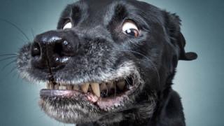 Най-смешните физиономии на кучета