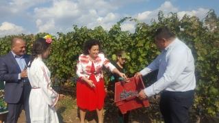 Очаква се 160 млн. литра вино да бъде произведено тази година