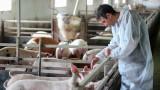 Потвърдиха нови огнища на чума в областите Плевен и Велико Търново