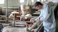 Ограниченията за свинско месо във Варненско важат до 30 октомври