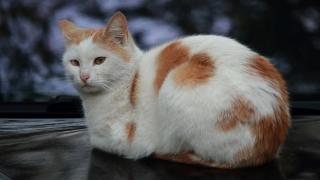 """""""Четири лапи"""" кастрира над 10 000 котки за 6 години в София"""