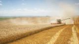 Исторически връх за реколтата от пшеница в света