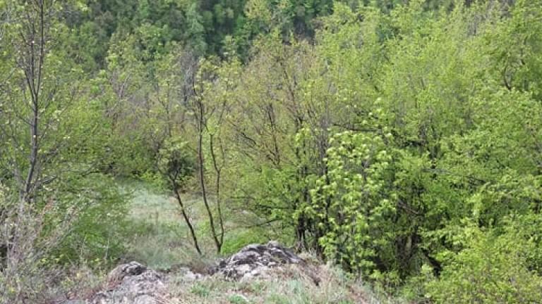 Откриха 72-годишен, изгубил се в гората край Велинград