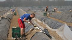 Инспекцията по труда със съвети към сезонните работници
