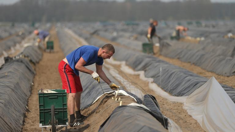 Договорите до 120 дни за прибиране на реколтата - вече и онлайн