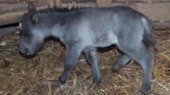 В зоопарка във Варна се роди пони