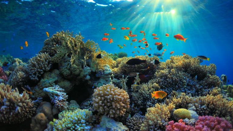 Коралови рифове в Червено море застрашени от петролна сделка между Израел и ОАЕ