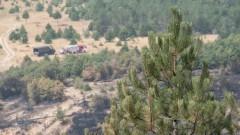 От незагасен фас лумнал пожарът над Кресна