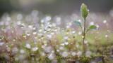 Дъжд в Западна България