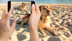 Как да разпознаваме породи кучета и котки със смартфона си