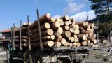 Бракониер с повече от 10 акта направи опит да прегази лесничей