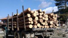 Румънци секат незаконно дървета на наш остров на Дунав