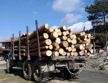 За по-строги наказания за дървената мафия, настояват от РБ
