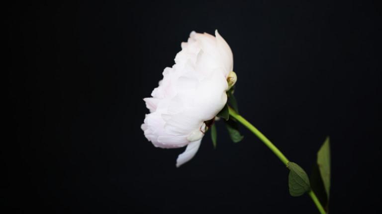 С бели рози пред парламента омбудсманът Мая Манолова почете 8 март