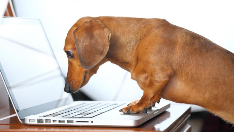 Социална мрежа за животни