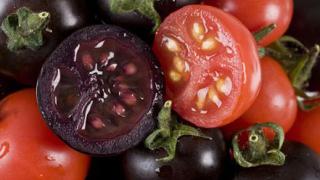 Лилави домати ще ни предпазват от рак