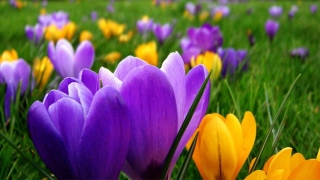 Пролет в неделя