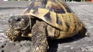 Повдигнаха обвинения на германец за отглеждане на костенурки от защитен вид