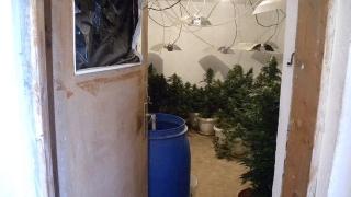 Модерна наркооранжерия откриха в добричкото село Драганово