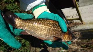 Конфискуваха 1,2 т риба с неустановен произход в Бургас
