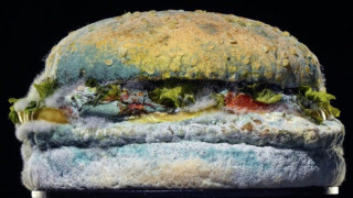 Най-добрият бургер е мухлясалият бургер