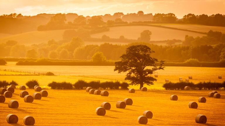 Британия разрешава генетично редактиране на култури в борбата за климата