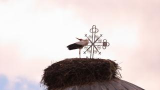 Първите щъркели долетяха в село Самуилово
