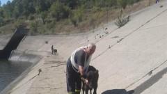 Пожарникари спасиха стадо животни от водоем край Момина Клисура