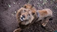 Без вход в зоолопарка за Деня на детето