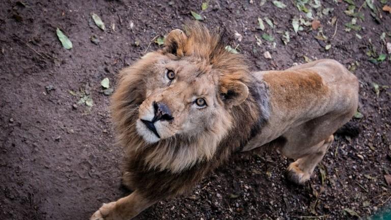 По случай Деня на детето - 1 юни Зоологическата градина