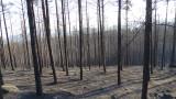 Възстановяването на гората над Кресненското дефиле ще отнеме 50 години