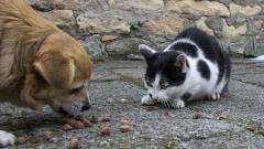 """Над 10 тона храна за животните в Хитрино са приготвили от """"Четири лапи"""""""
