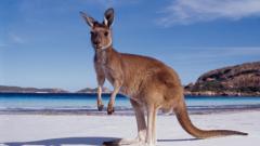 Австралия отчете на-големия в историята си търговски дефицит
