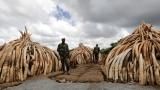 Кения изгори рекордните 105 тона слонова кост