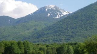 300 хектара вековни гори изсечени в Пирин
