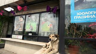 Кучета разкъсаха животни в софийския зоопарк