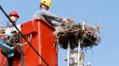Още 12 населени места с безопасни щъркелови гнезда