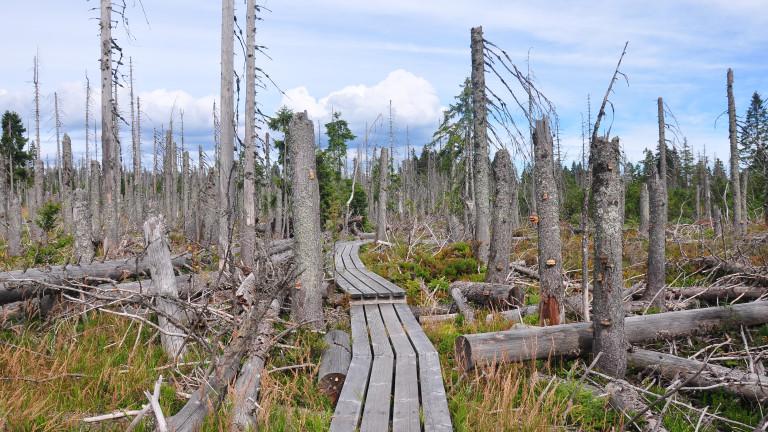 Символична цена на дървата за огрев, засегнати от корояд